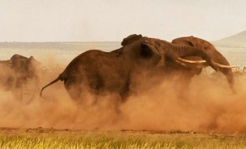 Στρατιωτική συνδρομή για την πάταξη της λαθροθηρίας ελεφάντων